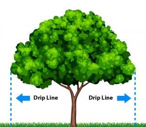 Tree drip line