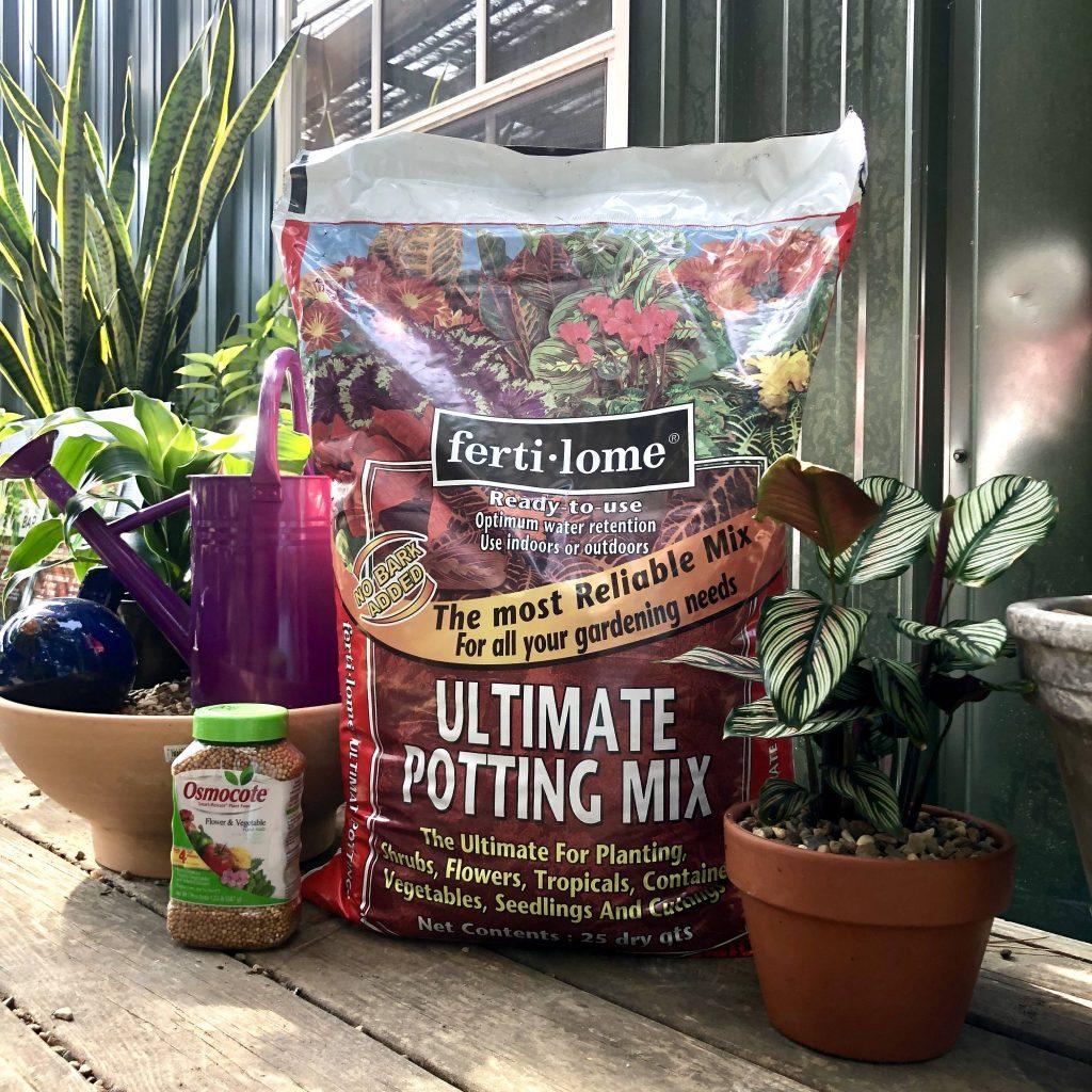 Potting up houseplants
