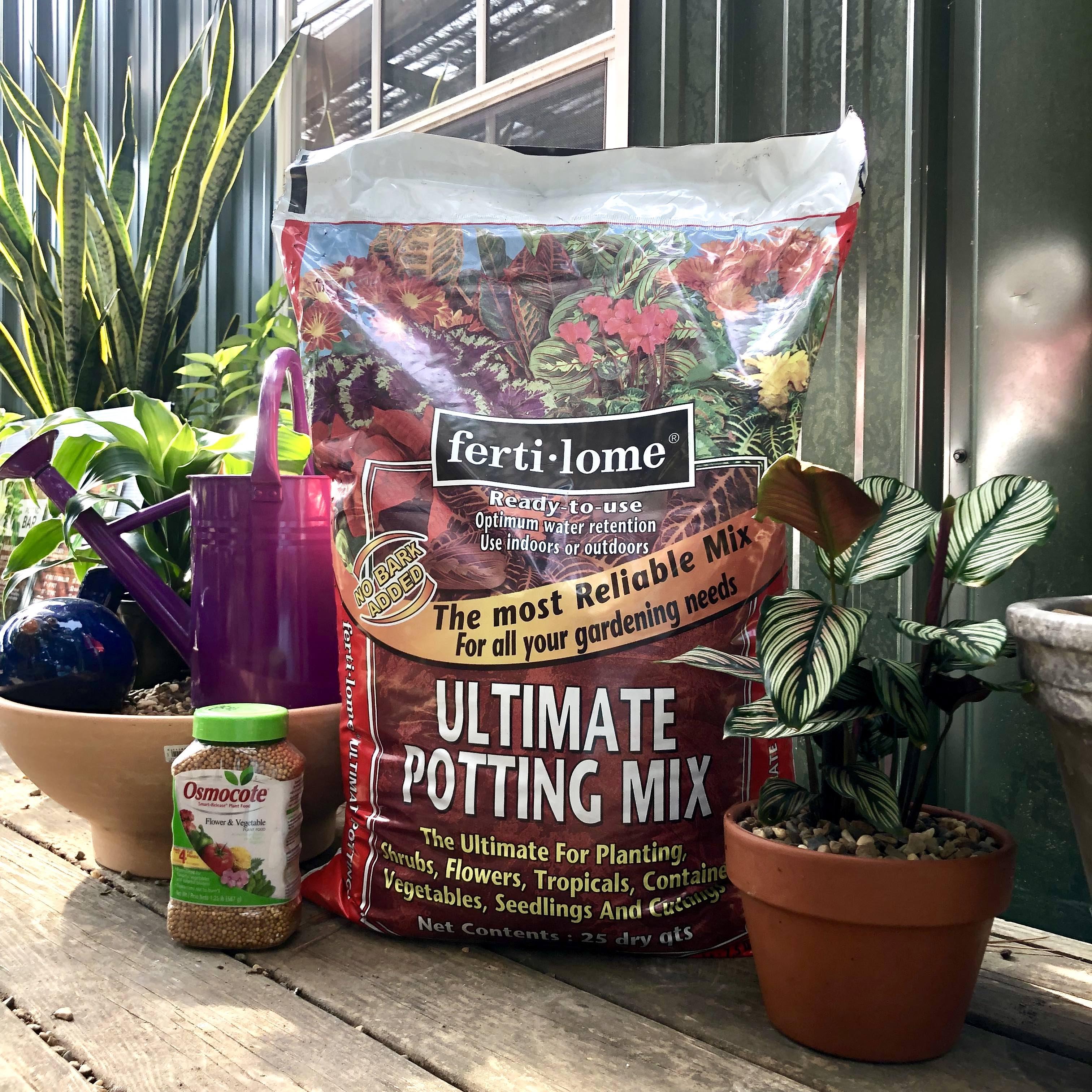 Potting Up Houseplants The Good Earth Garden Center