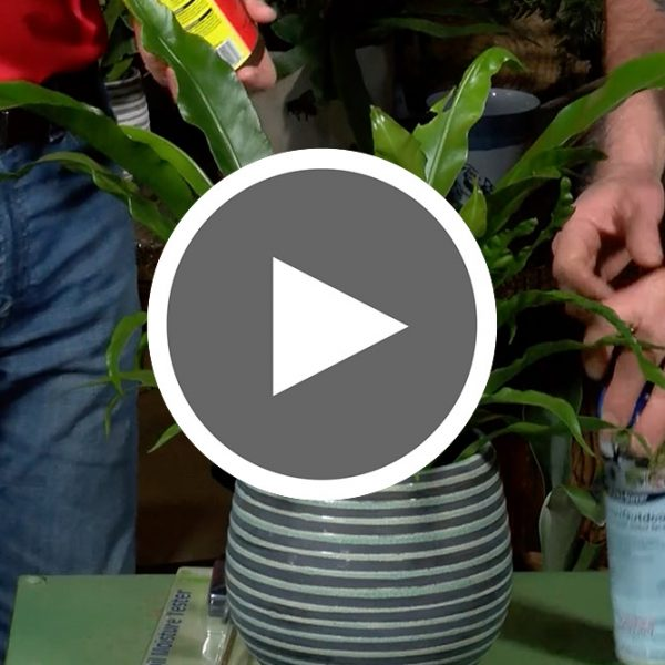 Thumbnail for The Proper Care of Houseplants Video - The Good Earth Garden Center