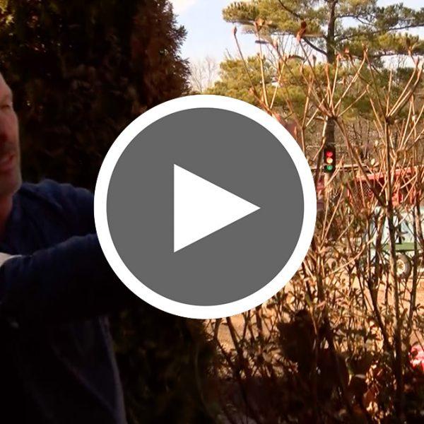 Thumbnail for Winter Damage Video - The Good Earth Garden Center